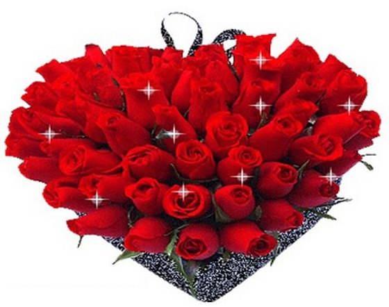 Lindas Fotos De Rosas Rojas