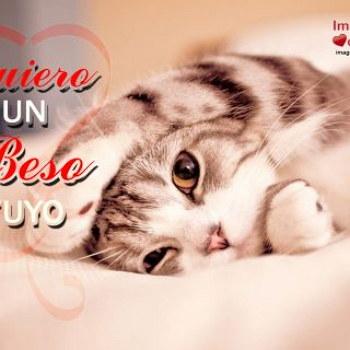 gatito que dice quiero un beso yuto