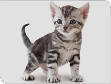 imagen de gatito 001