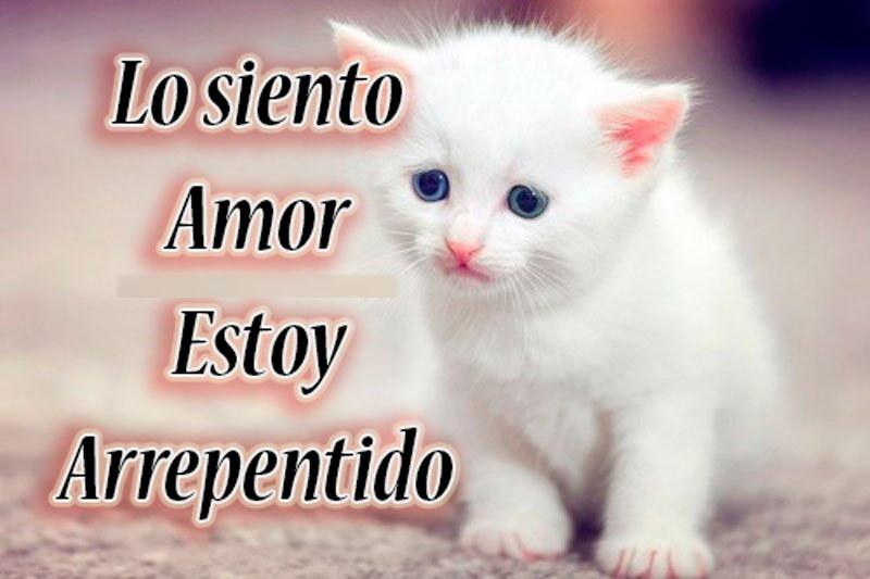 imagen de gatito lo siento amor
