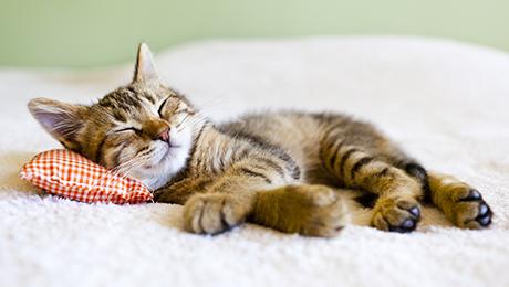 imagen de gato durmiendo