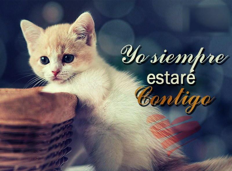 imagen de gato estare contigo