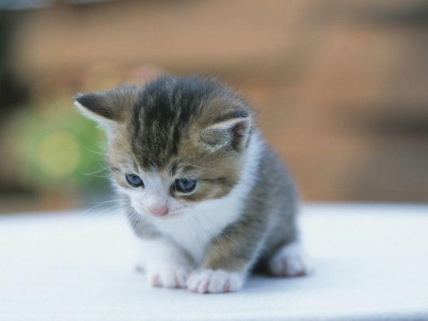 imagen de un gatito muy tierno