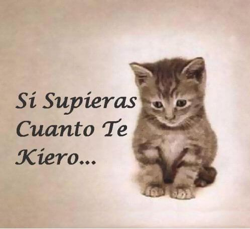 imagen gatito supieras cuanto te quiero