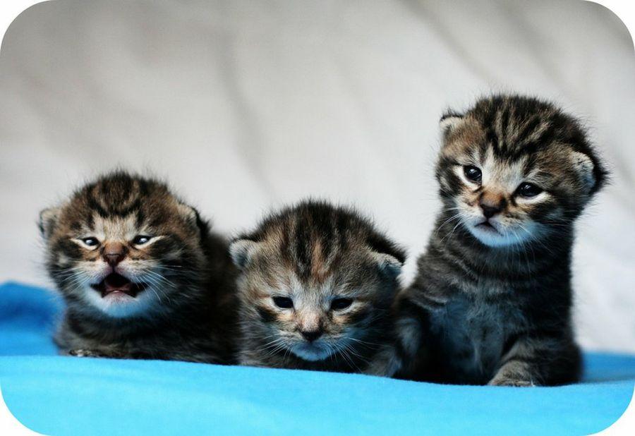 imagenes de 3 gatitos especial para hace meme