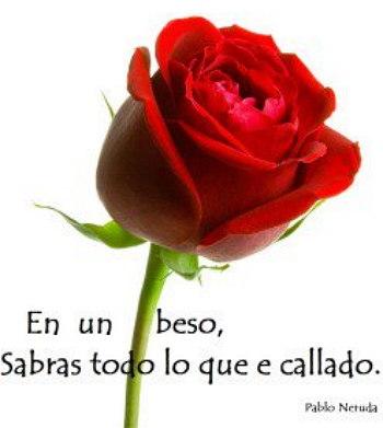 rosas y frases