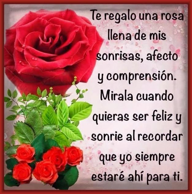 Te regalo una rosa frases de amor