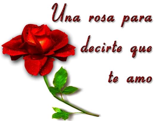 Una rosa con frases de amor bonita